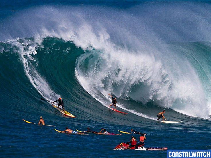 Hawaii Big Wave Surfing | Evênement: Fat Hawaii ! | Vagueo: surf shop et news de la glisse