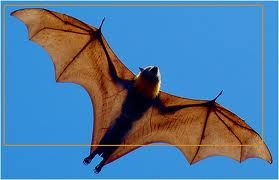 vleermuis vleugels - Google zoeken