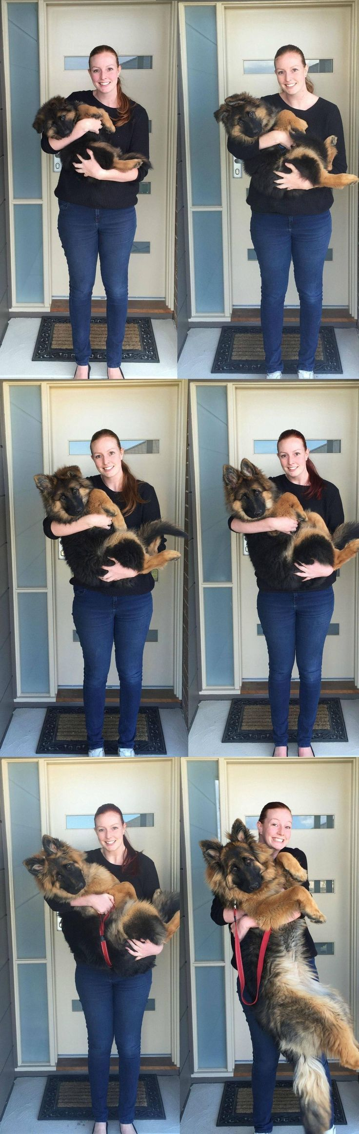 Look at this incredible series of photos from proud pet owner Ashley Lewis, showing what time and love does to a dog. In only 6 months, her lil' 8-week-old German shepherd blossomed from a wee puppy who could easily fit her arms to a hulking big puppy who probably has trouble fitting on the couch. - Tap the pin for the most adorable pawtastic fur baby apparel! You'll love the dog clothes and cat clothes! <3