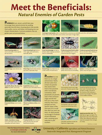 Poster: Meet the Beneficials, Natural Enemies of Garden Pests
