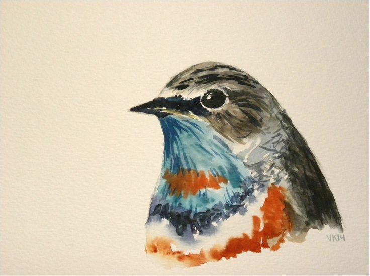 Bluethroat watercolor painting. #finland #art #watercolor #acquarelle #painting #finnishart #bird #bluethroat #birdart #birdpainting