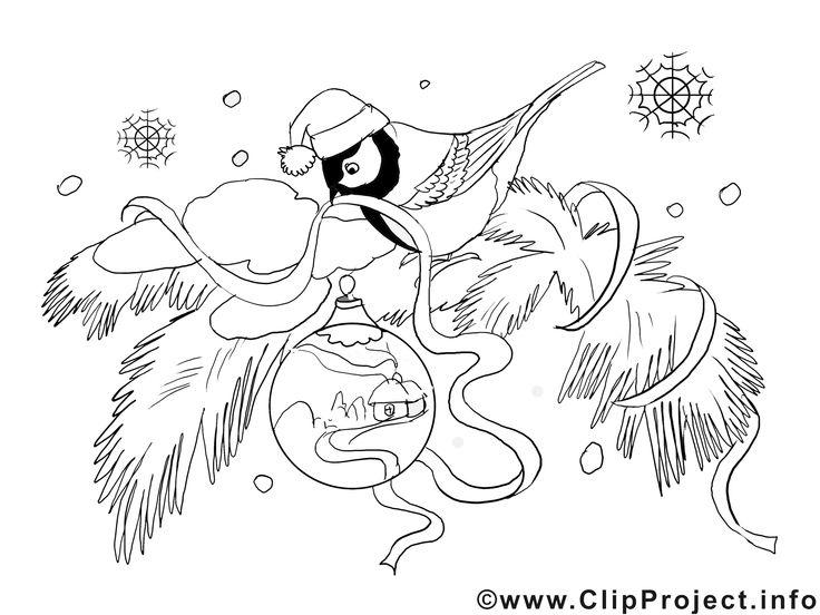 Bild Anatomie Vogel
