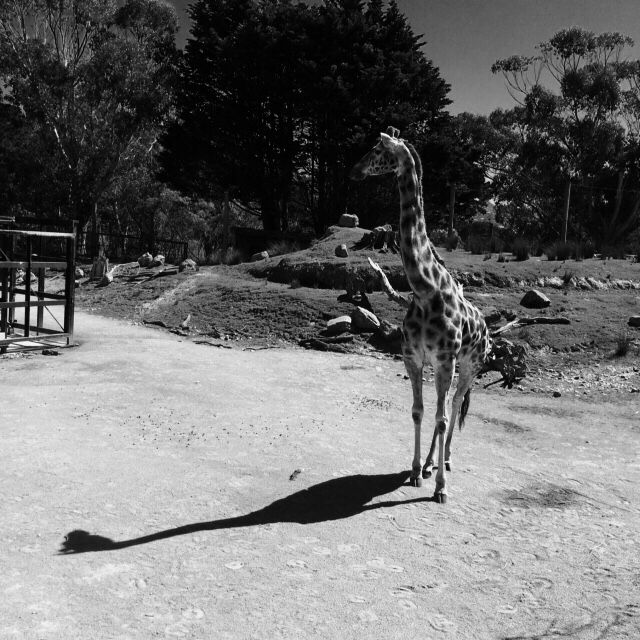 Love this black n white at the zoo.#photography #nz