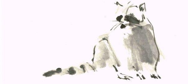 Raccoon by Lilith Ohan