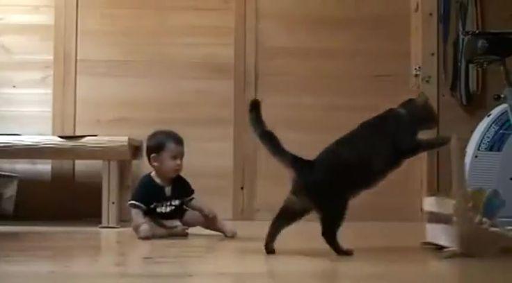 Cat Teaches Baby to Walk! So Cute - Cute Videos