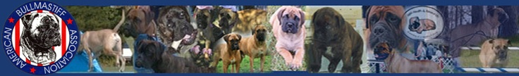 The American Bullmastiff Association -- THE place to go for all things bullmastiff
