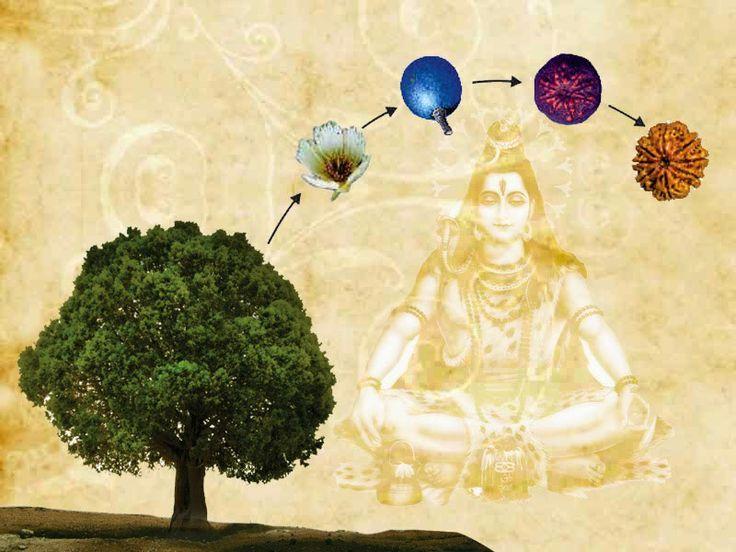 Brățări Rudraksha - simboluri sacre din mitologia hindusă
