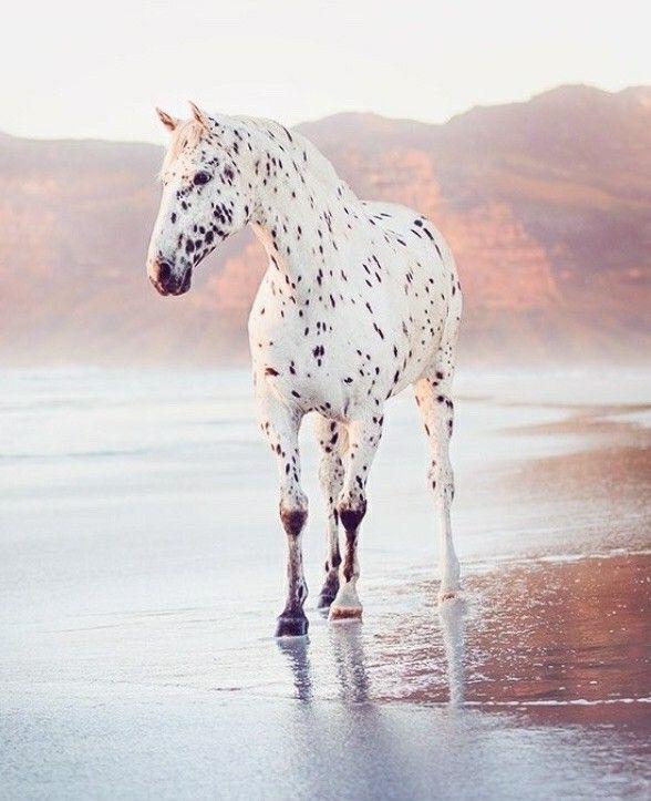 GUYS! Its the 102nd Dalmatian!! – Luna.Star