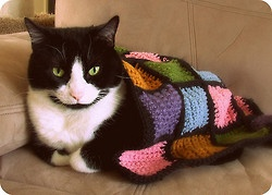 one spoiled kitty by thecrimsonowl on Flickr.