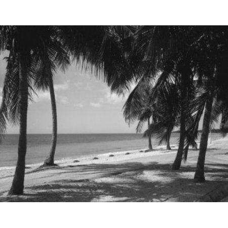USA Miami Crandon Park on Key Biscane Canvas Art - (18 x 24)
