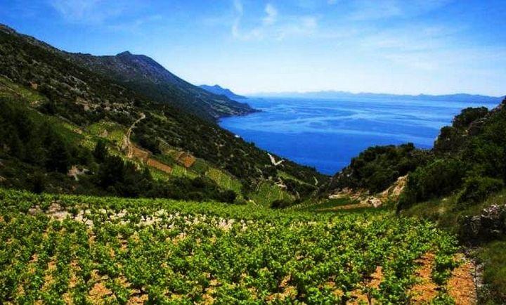 Winnica na półwyspie Pelješac || http://crolove.pl/peljesac-polwysep-winem-plynacy/ || #Peljesac #Croatia #Choracja #Hrvatska #wine