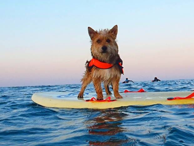 Our guide to pet-friendly holidays in the UK - UK - Travel - The Independent