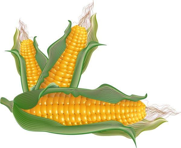 Fresh Vegetables Clip Art | Clip Art of Corn