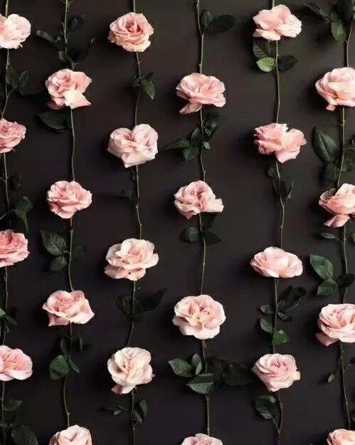 фон, цветок, розовый, розы