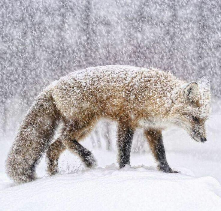 Oh je, ich hoffe dein Fell ist warm genug   – Tier