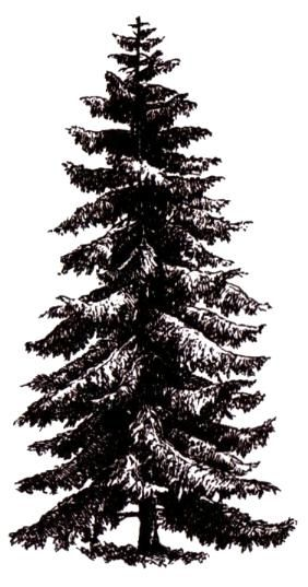 Pine Tree Large Mounted Rubber Stamp Scenery Christmas Winter 19 ...