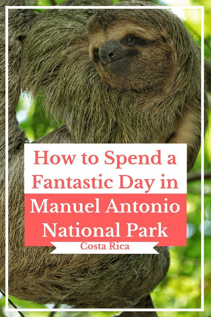 How to Spend a Fantastic Day in Manuel Antonio National Park   Travel Costa Rica   Travel Wildlife