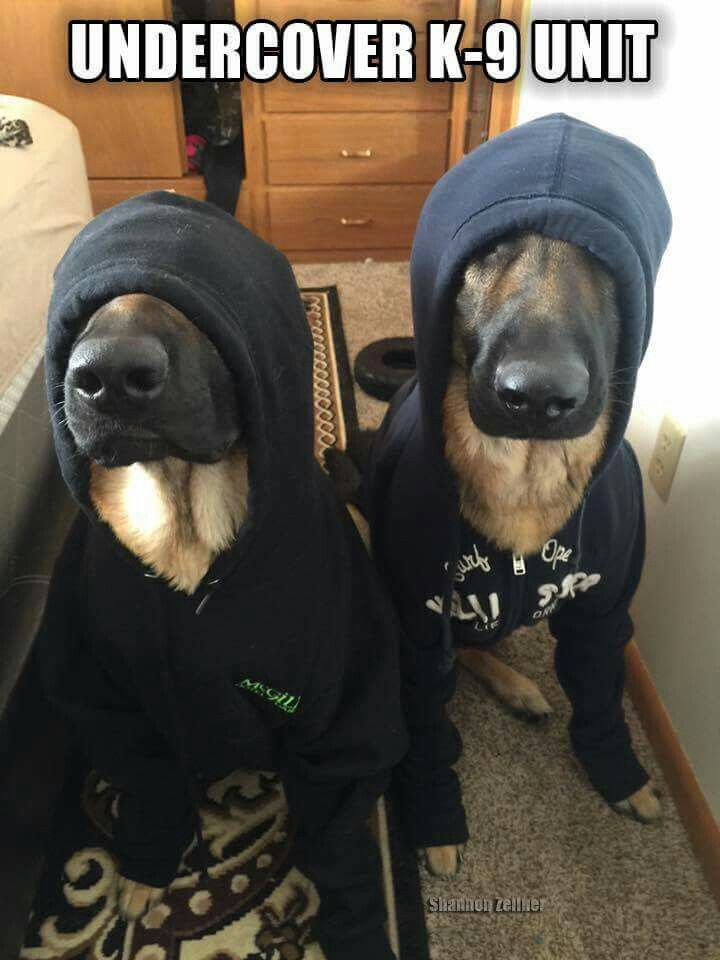 Haha! You can't even tell they are k9s | For Awesome Videos —> http://gwyl.io/