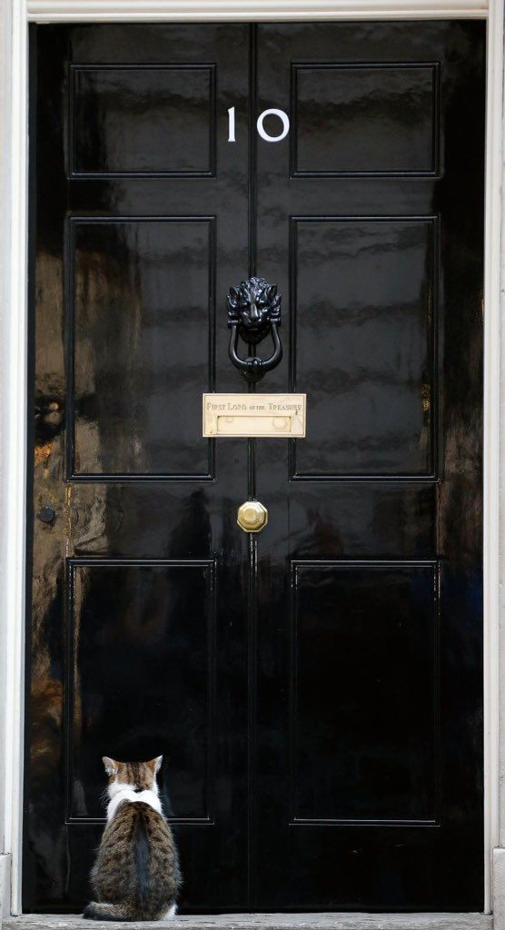 Larry the cat (British Prime Ministers cat) waiting to get into 10 Downing Street.