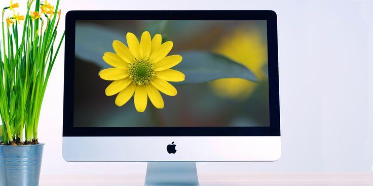 Красивые цветы для вашего рабочего стола и экрана блокировки - https://lifehacker.ru/2016/10/17/free-wallpapers-14/