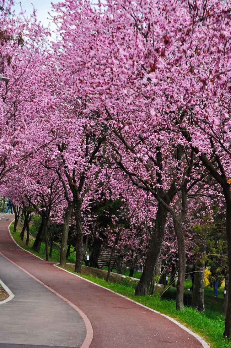Spring in Timisoara ( Romania) #spring