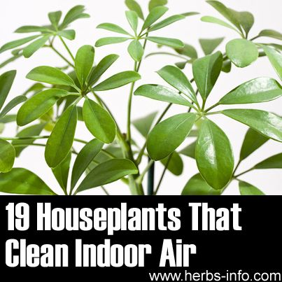 ❤ Originally from NASA research, click the link to learn all about the best air purifying indoor plants! ❤