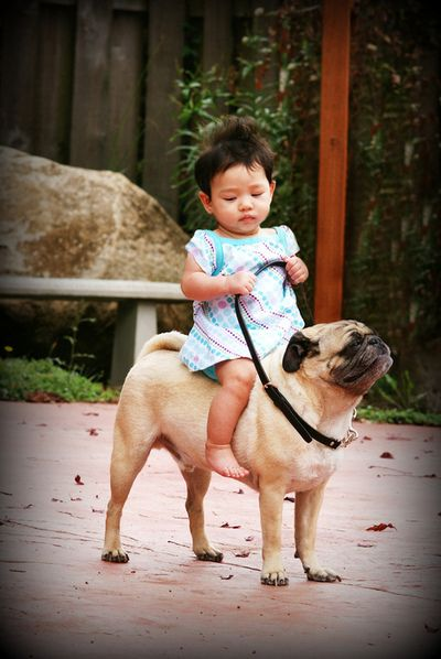 This dog looks so proud to have such an important rider.: Except, Dogs, Ponies, Funny, Children, Pugs, Asian Baby, Kids, Animal