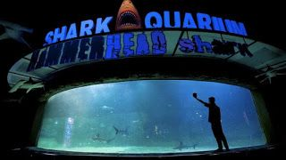 Indonesia travel blog and service information: Witness the Beauty of Aquatic Life at Sea World In...