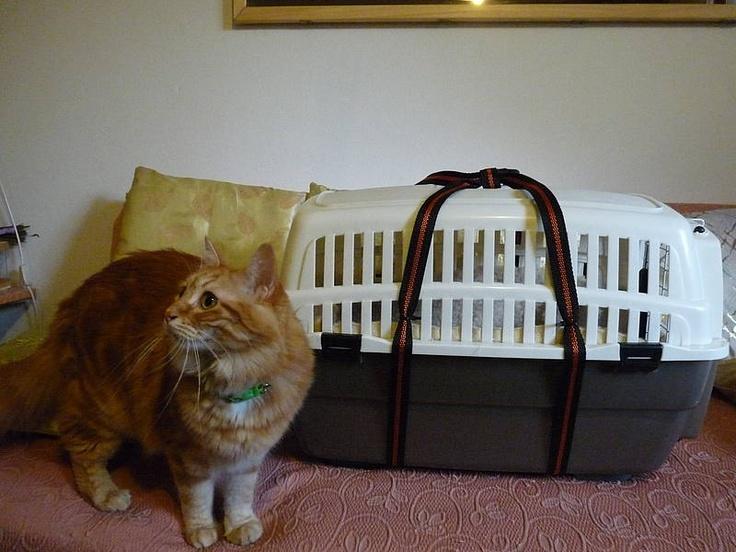 Il trasportino per gatti grassi