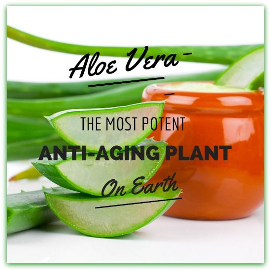 Aloe Vera for Wrinkles: Why It's the Best Anti-Aging Plant ( 6 Homemade Recipes)