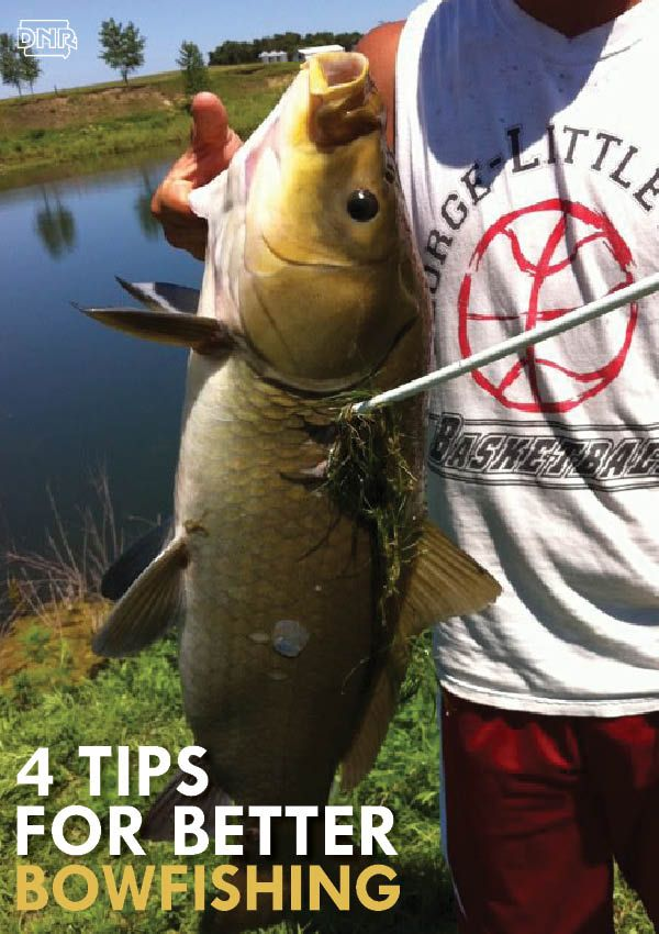 Love archery? Love fishing? Put the two together and enjoy bowfishing! Good tips for getting started. | Iowa DNR