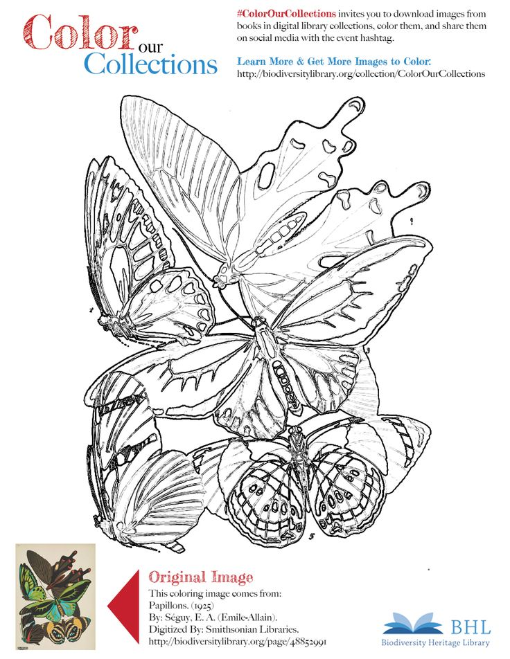 """#ColorOurCollections. Original Image: http://biodiversitylibrary.org/page/48852991. To download this image, right click on the pin and choose """"save image as"""" to save the image to your computer. You can then print and color at your leisure!"""