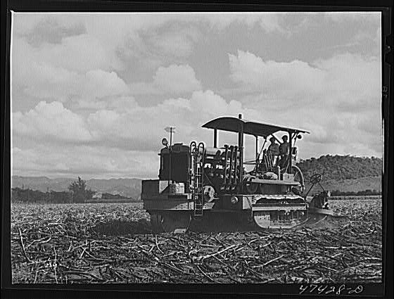 gyrotiller2.jpg;  Sugar Cane
