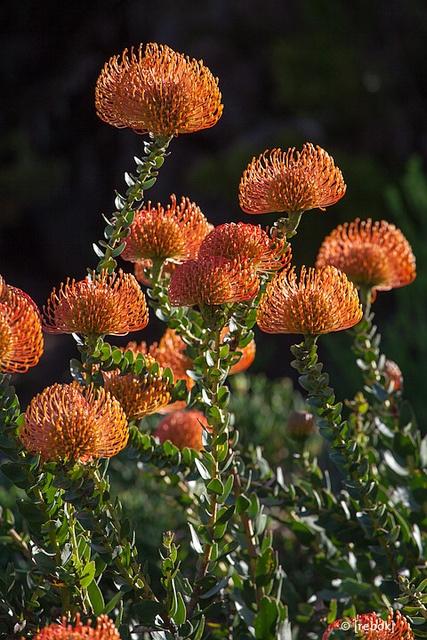 Kirstenbosch Botanical Gardens, Cape Town, South Africa