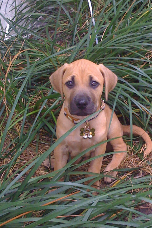 Such an adorable boy!  This is my friend's Black Mouth Cur, Riley when he was a baby ;-)