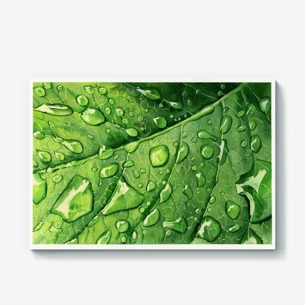 Холст Капли росы на зеленом листе, Автор: Любовь Лебедева, Цена: 2300 р.