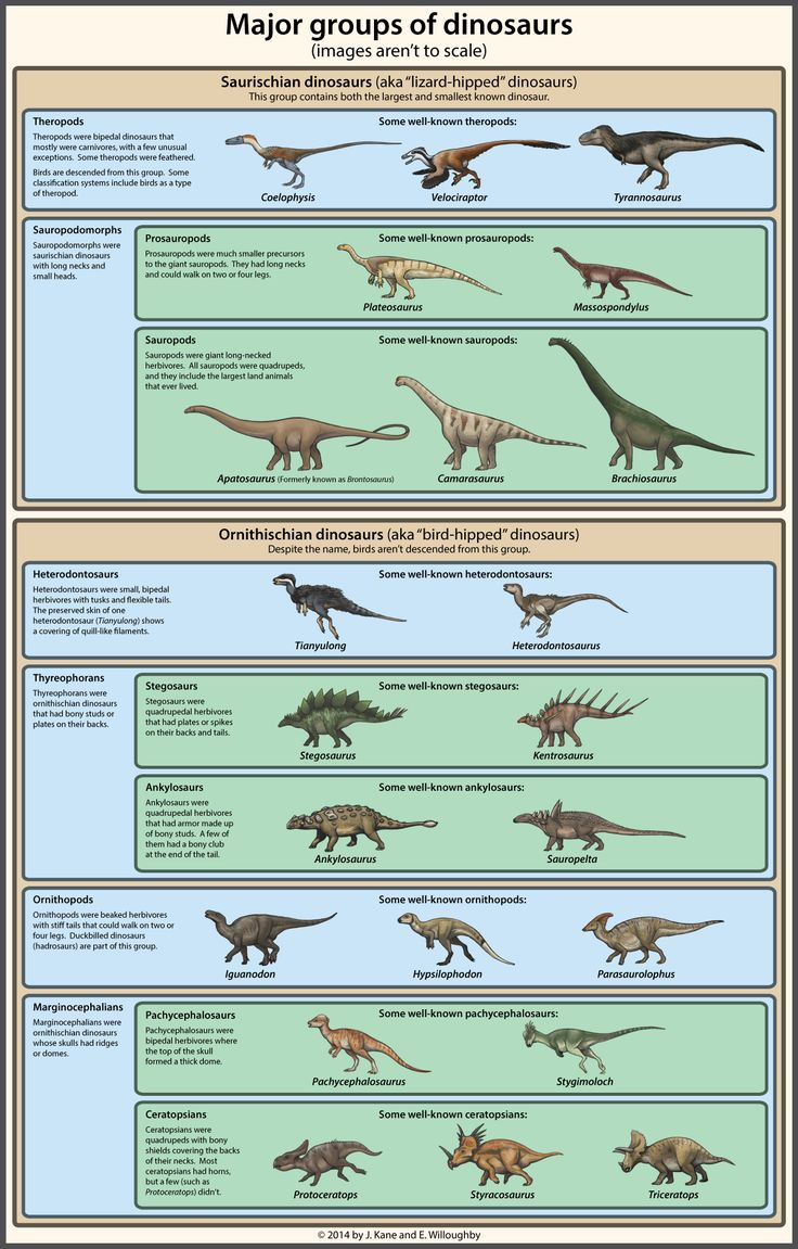 101 best history world prehistoric images on pinterest dinosaur classification simplified by ewilloughby on deviantart pooptronica