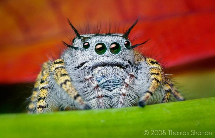 Spiders Looking Cute http://bit.ly/1yOIVu2