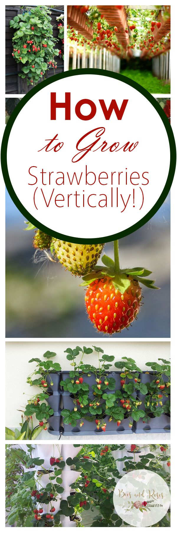 Growing strawberries in gutters diy idea - Best 20 Grow Strawberries Ideas On Pinterest How To Grow Strawberries Strawberry Plants And Strawberries Garden