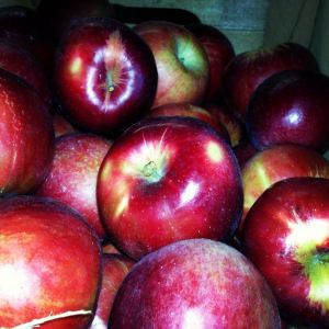 Ruby Jon Apples: A tart, local alternative to Granny Smiths