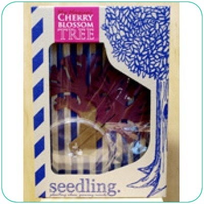 Seedling My Magical Cherry Blossom Tree - Theo