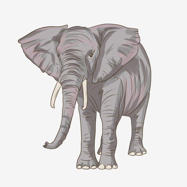Cartoon Elephant S Nose Elephant Clipart Elephant Elephant Head Png Transparent Clipart Image And Psd File For Free Download Elephant Cartoon Elephant Elephant Head