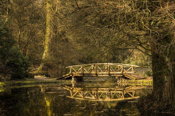 Bridge by Peptan Marius