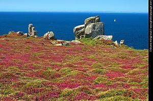 Landes bretonne #Bretagne #brittany #France #tourism
