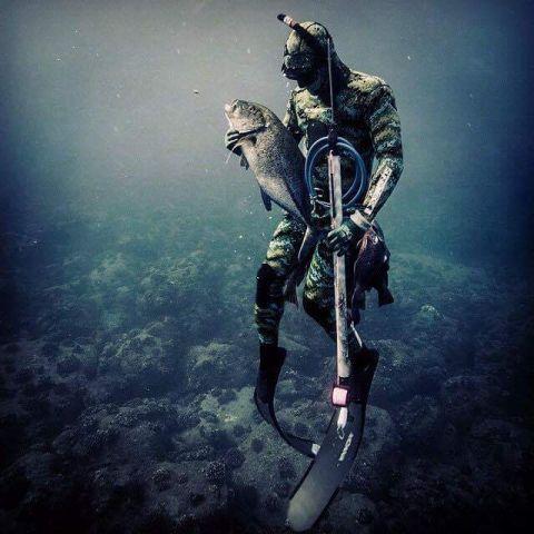 spearfishing - Le meilleur du web - Galerie - Chasse sous marine le forum