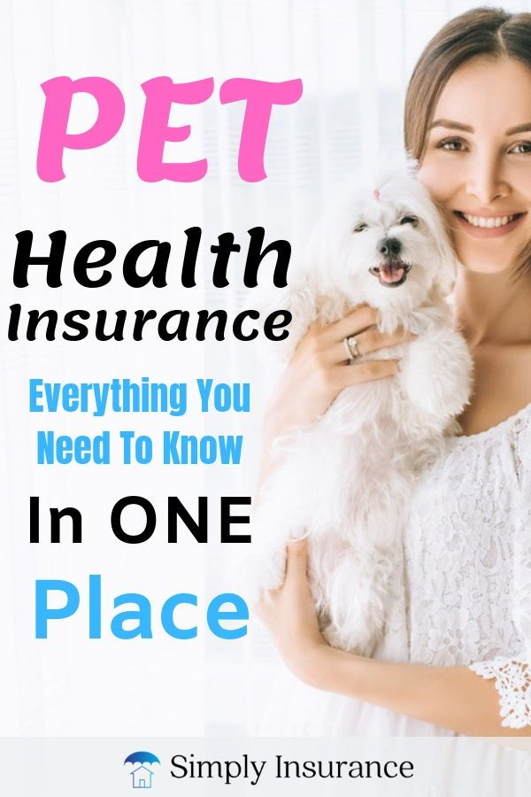 Pet Health Insurance Everything You Need To Know In One Place