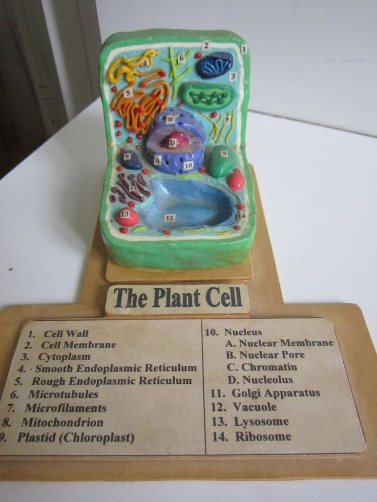 High school plant cell model from 2005 in polymer clay.