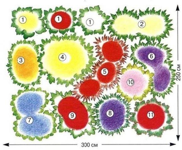 Это схема клумбы многолетников для солнечного места, которая будет цвести уже в первый год. На заднем плане двулетняя шток-роза 'Pleniflora' (1) — желтая, красная и белая — вместе с подсолнечником десятилепестным 'Capenoch Star' (2), украшенным многочисленными соцветиями-корзинками. Мак исландский (3) подхватывает эстафету красок шток-розы и передает ее зверобою непахучему (4). Вьется по клумбе багряная лента из лобелии кардинальской (5). Котовник Фассена (6), колокольчик Посхарского (7) и…