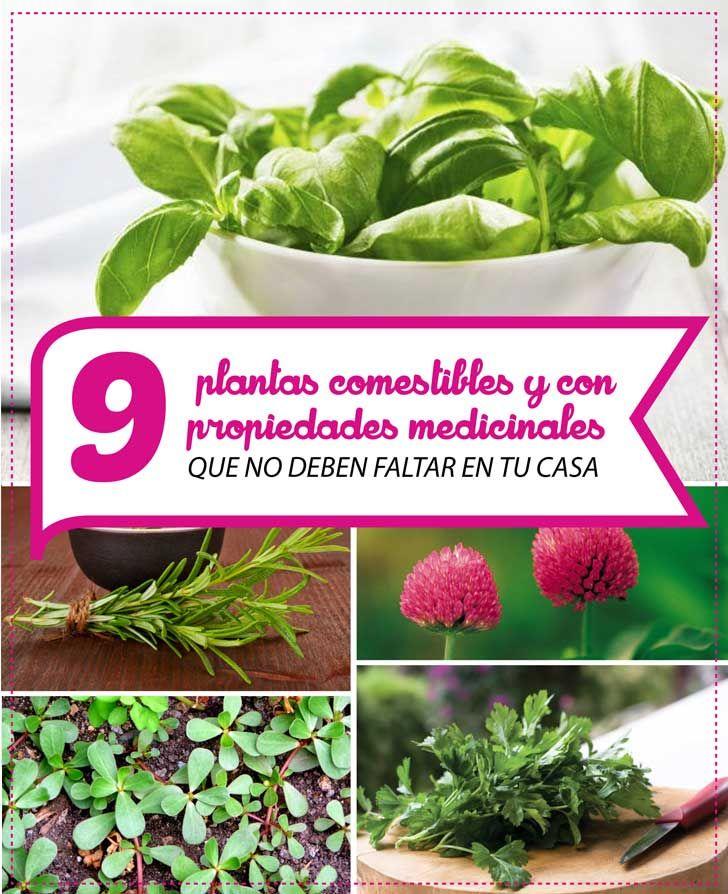 9 plantas comestibles y con propiedades medicinales que no