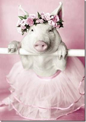 Flower Girl Pig                                                       …